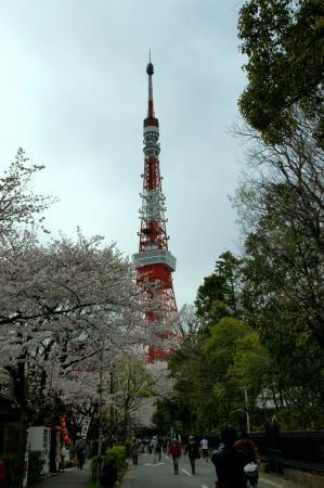 DSC04534桜東京タワー