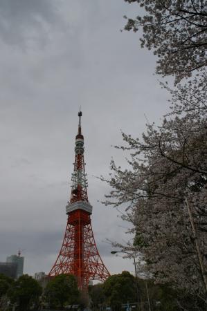DSC04501桜東京タワー