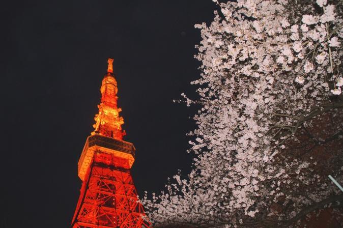 DSC04919桜東京タワー