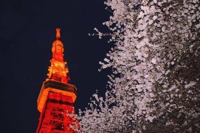 DSC04914桜東京タワー