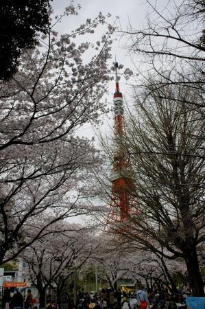 DSC04489桜東京タワー