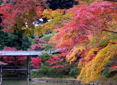 京都紅葉ランキング9位 高台寺 紅葉