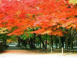 京都紅葉ランキング10位 南禅寺 紅葉