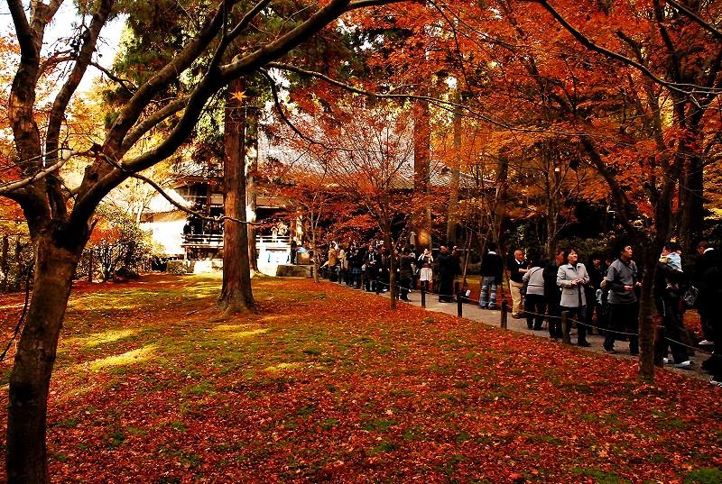 京都紅葉ランキング4位 三千院 紅葉見頃