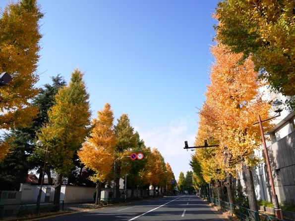 131207.江戸川橋・はつとみ0052