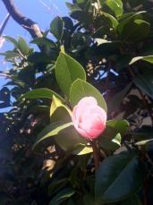 photo_20120222195648.jpg