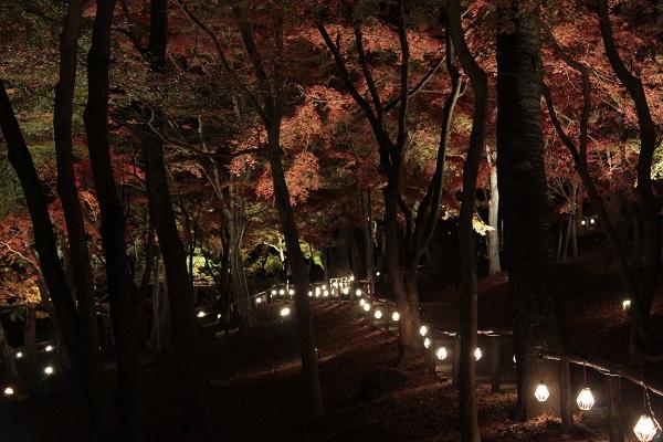 修善寺 虹の郷 紅葉ライトアップ