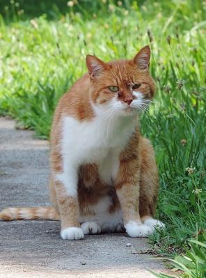 猫130708昭和記念公園 (5)T済、S済