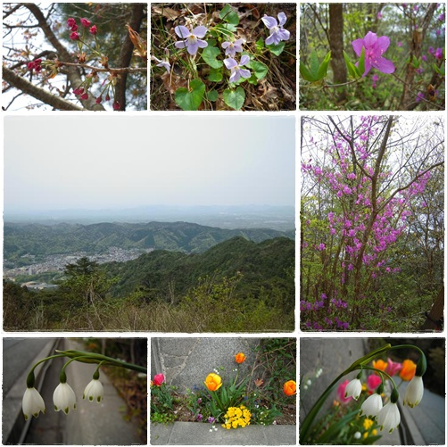 山歩き・六甲山 4月29日