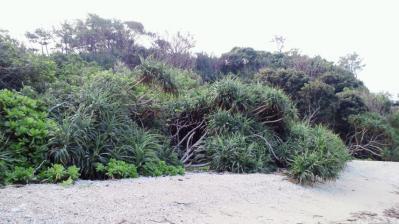 鯨浜の掃除2