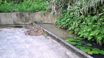 裏の池の掃除1
