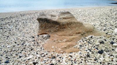 砂のカメ2