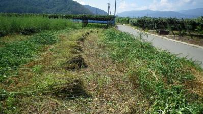 2011-9-14桔梗農園