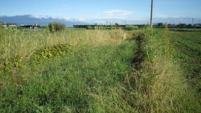2011-9-19畑