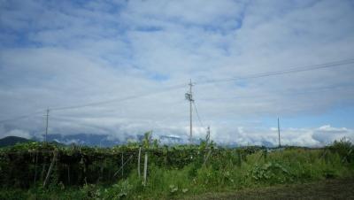 2011-9-22畑.jog (7)
