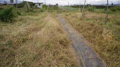 2011-9-30いちご