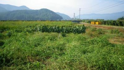 2011-10-2大豆