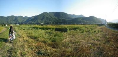 2011-10-3大豆1