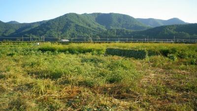 2011-10-3大豆