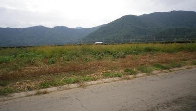 2011-10-5大豆