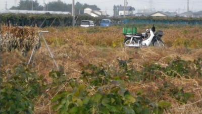 2011-10-12大豆