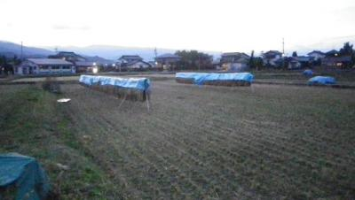 2011-10-21田んぼ