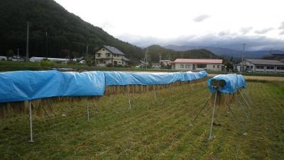 2011-10-22田んぼ