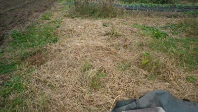 2011-10-25里芋