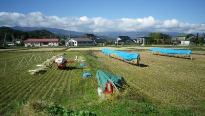 2011-10-26田んぼ