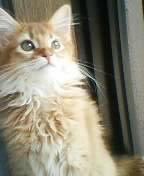 kirara子猫2
