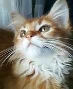 kirara子猫