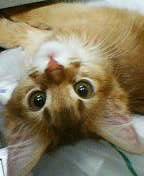 kirara子猫3