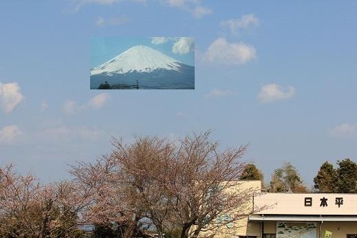 日本平の富士
