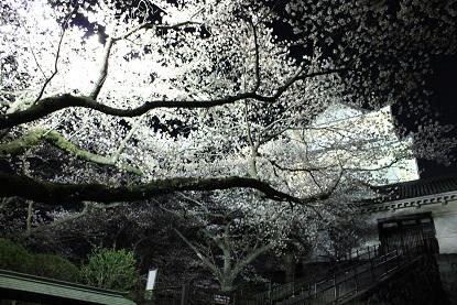 小田原城址 夜桜