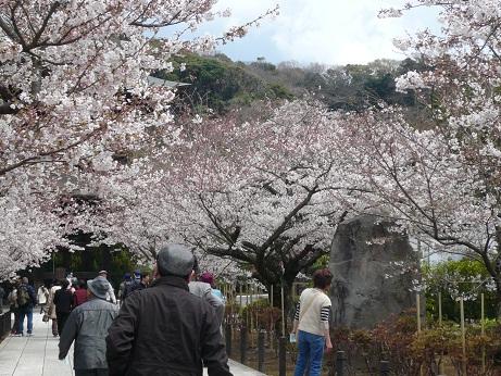 鶴岡八幡宮3