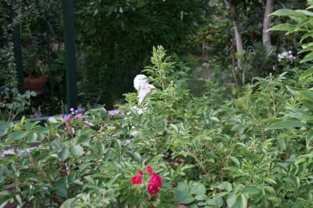 2011-08-22_14.jpg