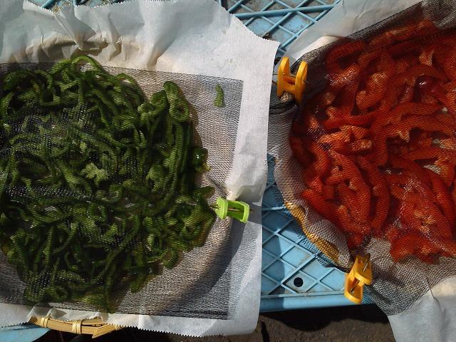 乾燥野菜「ピーマン」