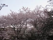 DTP屋ブログ-hanami1