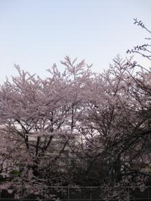 DTP屋ブログ-hanami2