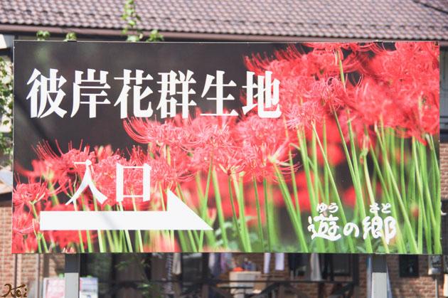 20140928彼岸花_鹿沼 游の里01