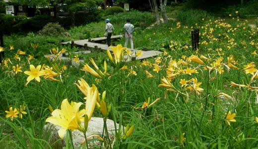 六甲高山植物園2013初夏-2