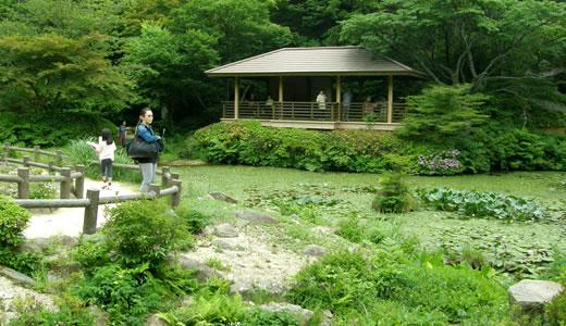 六甲高山植物園2013初夏(2)-1