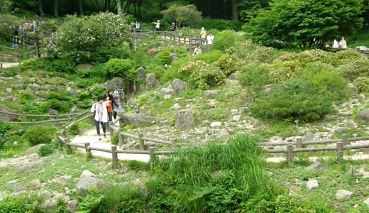 六甲高山植物園2013初夏(2)-3