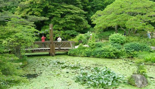 六甲高山植物園2013初夏(2)-4