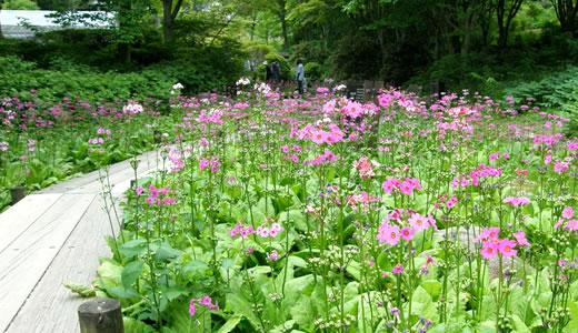 六甲高山植物園2013初夏(2)-5