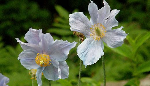 六甲高山植物園2013初夏-3