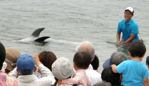 須磨イルカの日2013(3)-2