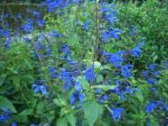 ☆ファームの花 その1