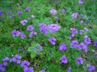 ☆ファームのお花