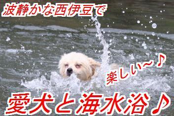 QOYI8t6Z_20130506023252.jpg